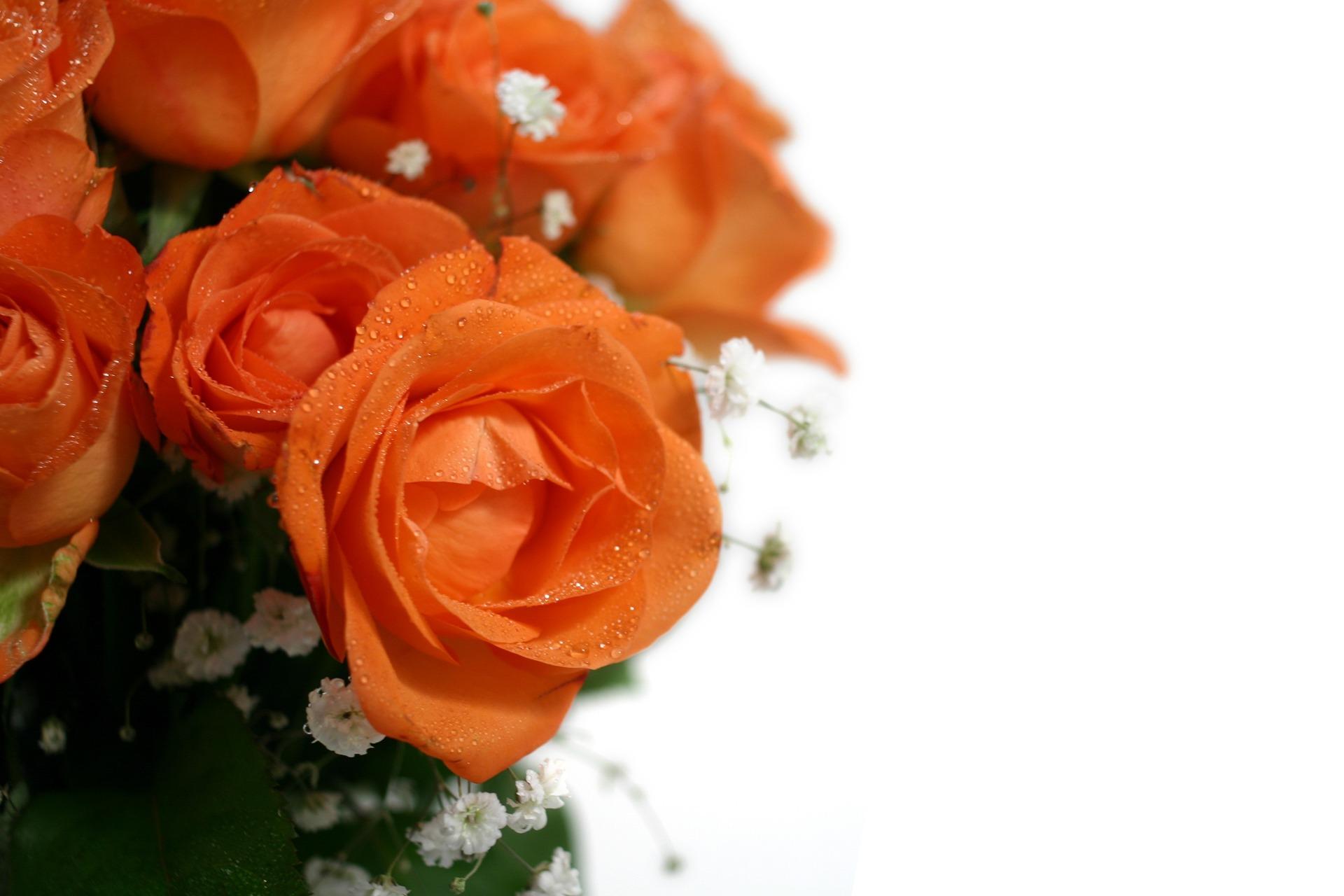 roses-1029194_1920